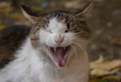 Cat. Image of smiley cat Stock Images