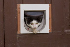 Cat In Door Royalty Free Stock Photos