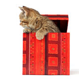 Cat In Gift Box Royalty Free Stock Photo