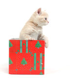 Cat In Gift Box Stock Photos