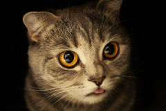 Free Cat In The Dark Stock Photos - 22739193