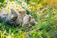 Free Cat In The Garden Royalty Free Stock Photos - 78003888