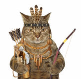 Cat indian with bow and arrow stock photography