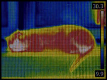 Cat Infrared Image Royalty Free Stock Images