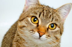 Cat inquiring look. Royalty Free Stock Photos