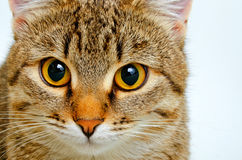 Cat inquiring look. Stock Image