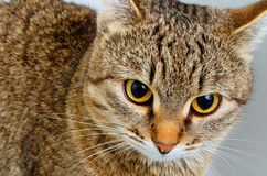 Cat inquiring look. Stock Photos