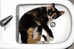 Cat inside bidet Stock Image