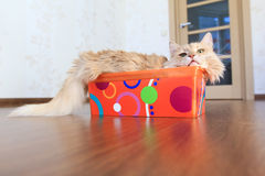 Cat inside a box Stock Images