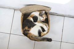 Cat Inside A Box Stock Image