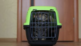 Cat inside a cat carrier box stock footage