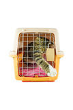 Cat inside a cat carrier box Royalty Free Stock Image