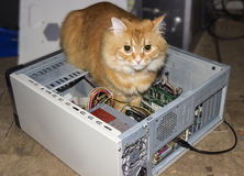 Cat inside the computer Royalty Free Stock Photos