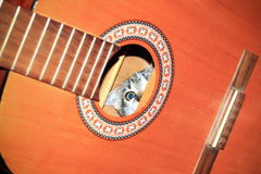 Cat inside a guitar. Kitten hiding inside old acoustic guitar Royalty Free Stock Images