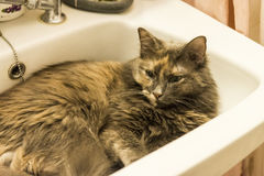 Cat inside sink. Cat sitting inside sink during hot day Royalty Free Stock Photo