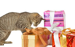 Cat inspecting Christmas presents Stock Photography