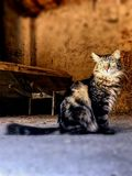 A cat with an intense gaze stock image
