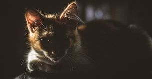 Cat with intense look in the sunlight. stock photos