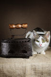 Cat And Iron Lizenzfreie Stockfotos