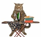 Cat is ironing clothes stock photo