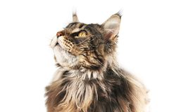 Free Cat Is Looking Up Stock Images - 160840164