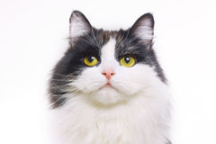 Cat isolated Stock Image