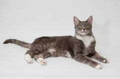 Cat isolated on white Royalty Free Stock Photo