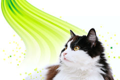 Cat isolated on white. Background Stock Photo