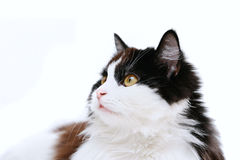 Cat isolated on white. Background Stock Images