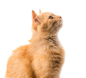Cat isolated Stock Photos