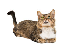 Cat isolated Royalty Free Stock Photos