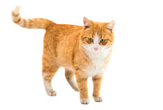 cat isolated stock photography