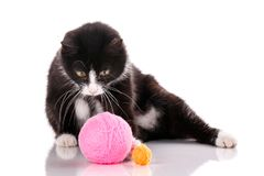 The cat is isolated on white. Kitten is played with a ball of thread. Royalty Free Stock Images