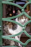 Cat of Istanbul Stock Photo