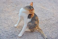 Cat itching Royalty Free Stock Photography