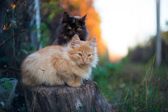Cat and its shadow. Two kittens sitting on a tree stump Royalty Free Stock Photos