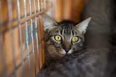Cat in jail waiting to be free Stock Images