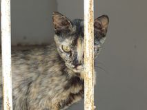 Cat in Jericho Royalty Free Stock Photography