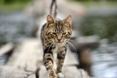 Cat on a jetty on the lake Royalty Free Stock Photos