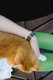 cat and jewellery Stock Images