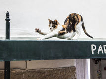 Cat before Jump Royalty Free Stock Images