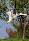 Cat jumping royalty free stock photos
