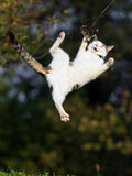 Cat jumping. In grass field Royalty Free Stock Photo