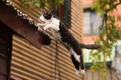 Cat Jumping in het geschilderde huis van La boca in Buenos aires royalty-vrije stock afbeeldingen