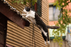 Cat Jumping in la boca painted house in Buenos Aires Royalty Free Stock Images