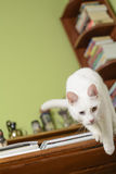 Cat Jumping Off From The Edge Of The Writing Desk Stock Images