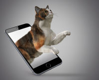 Cat jumping out of phone Royalty Free Stock Photos