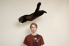 Cat Jumping Over A Man's Head. A maine coon cat leaps over a young males head. The person is just staring into the camera Royalty Free Stock Images