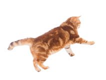 Cat jumping Stock Photos