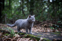 The cat in the jungle. The little cat in the jungle Royalty Free Stock Photo